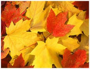 https://www.allaboutinterest.com/wp-content/uploads/2013/10/fall_leaves-300x230.jpeg